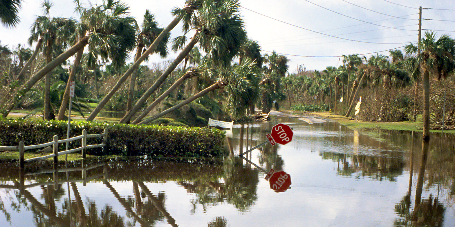 Palm trees near flooded road